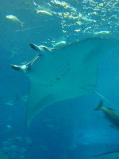 沖縄、美ら海水族館